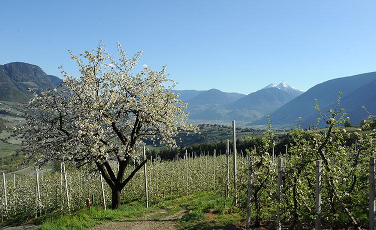 Apfelbütenwoche